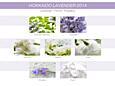 Mr&Mrs Fragrance Easy diffúzor - LAVANDA D´HOKKAIDO (Levendulaz Hokkaidóból)