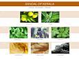 Mr&Mrs Fragrance Easy diffúzor - Sandalo del Kerala (Szantal z Kerala-ból)